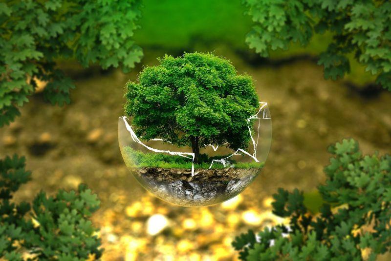 Día del Árbol: ¿por qué es importante su celebración?