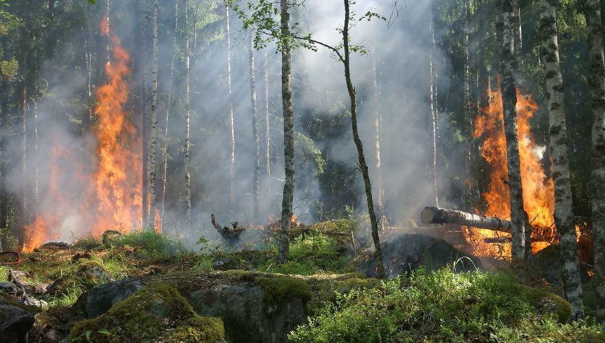 Causas de los incendios forestales