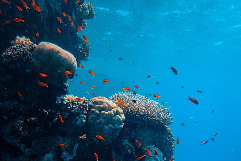 Día de los Océanos: ¿por qué lo celebramos?